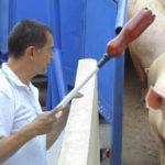 Bienestar Animal – Módulo porcino